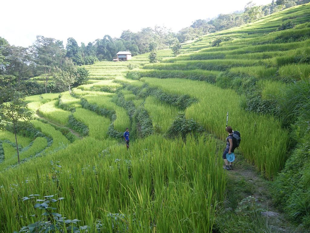 Marche dans les rizières pendant des heures pour nous rendre dans les familles, soleil, chaleur et humidité sont au rendez-vous !